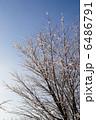樹氷 6486791