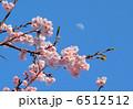 桜 6512512