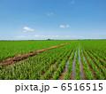 快晴 田んぼ 田の写真 6516515