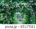 バラ園 ローズガーデン バラの写真 6517581