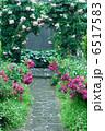 バラ園 ローズガーデン バラの写真 6517583
