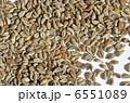たね 種 種子の写真 6551089