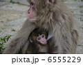 子ザル 子猿 親子猿の写真 6555229