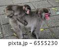 子ザル 子猿 親子猿の写真 6555230