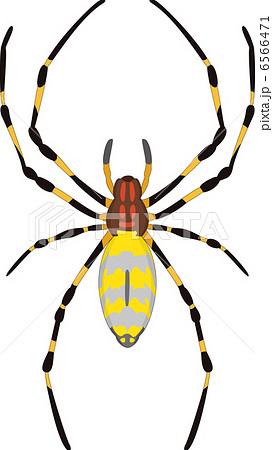 蜘蛛のイラスト素材 6566471 Pixta