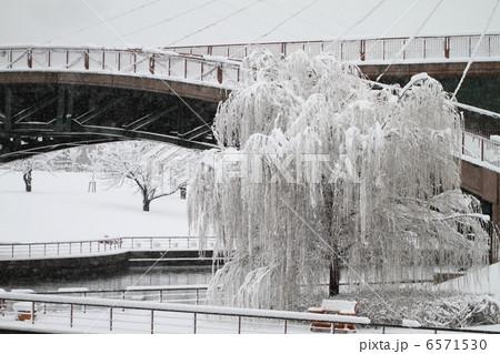 雪の親水公園 6571530