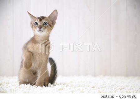 CATSの写真素材 [6584930] - PIXTA
