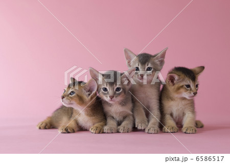 集まれ!子犬と子猫の写真素材 [6586517] - PIXTA