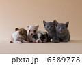 集まれ!子犬と子猫 6589778