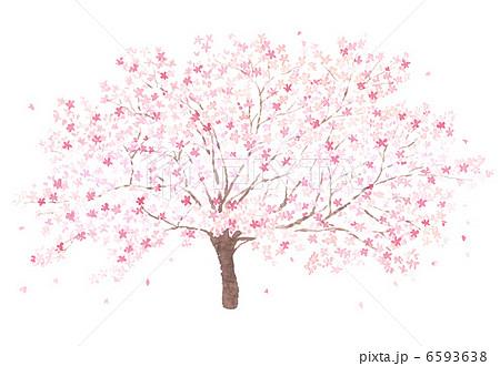 桜の木淡い水彩画のイラスト素材 6593638 Pixta