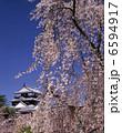 枝垂れ桜 さくら 花の写真 6594917