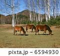 木曽馬の里 6594930