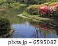 池とツツジ 6595082