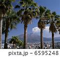 樹木 ヤシ 椰子の木の写真 6595248