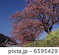 みなみの桜 6595429