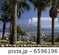 ヤシ 椰子の木 ヤシの木の写真 6596196