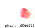バラの花びら 6599838