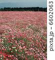 お花畑 お花 フラワーの写真 6602063