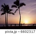椰子 夕景 椰子の木の写真 6602317