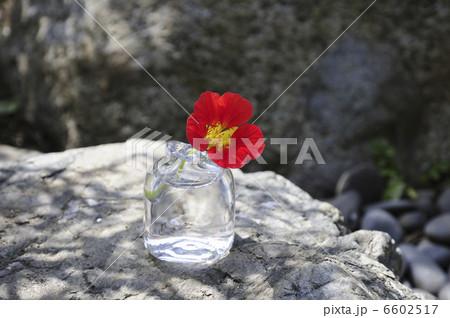 ガラス花瓶に入れた花ノウゼンハレンの写真素材 [6602517] - PIXTA