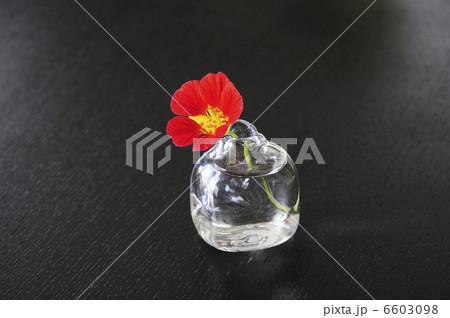 ガラス花瓶に入れた花ノウゼンハレンの写真素材 [6603098] - PIXTA