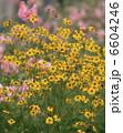 お花畑 お花 花の写真 6604246