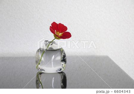 ガラス花瓶に入れた花ノウゼンハレンの写真素材 [6604343] - PIXTA