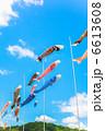 鯉幟 コイノボリ 鯉のぼりの写真 6613608