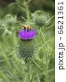 フラワー 蜜蜂 蜂の写真 6621361