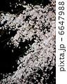 櫻 満開 桜の写真 6647988