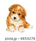 子犬 犬 いぬのイラスト 6654276