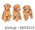 子犬 犬 いぬのイラスト 6654314
