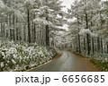 霧氷 唐松 樹木の写真 6656685