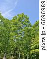 樹木 木立 新緑の写真 6696989