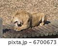 百獣の王ライオウの食事  6700673