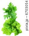 シュンギク 菜花 食用菊の写真 6703054