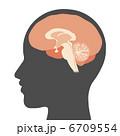 脳の断面図 6709554