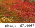 楓紅葉 モミジ 紅葉の写真 6714967
