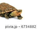 かめ カメ リクガメの写真 6734882