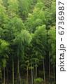 竹藪 竹やぶ タケの写真 6736987