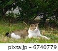 ネコ ノラネコ 野良猫の写真 6740779