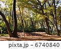 木々 神代植物公園 木洩れ日の写真 6740840