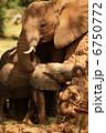 ゾウの親子 6750772