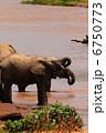 水を飲むゾウ 6750773