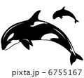 シャチ 鯱 動物のイラスト 6755167