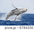 ザトウクジラのブリーチ 6784200