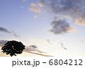 夕焼けのセブンスターの木 6804212