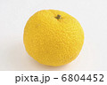 ゆず 果物 柚子の写真 6804452