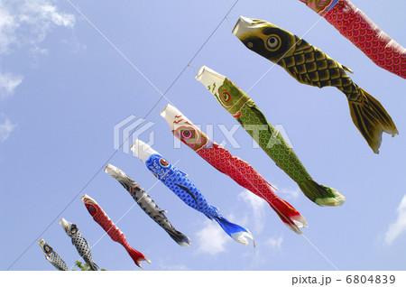 鯉のぼり 6804839