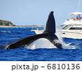 ザトウクジラのテールスラップ 6810136